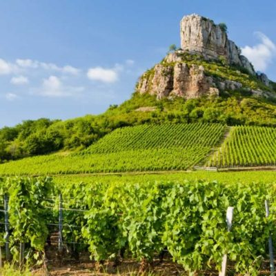 Exquisite White Wines From Burgundy France