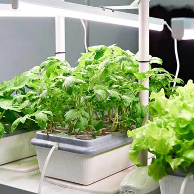The ProGrow Aeroponics Approach to Growing at Home