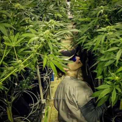 New Jersey Marijuana Legalization NJ in 2020
