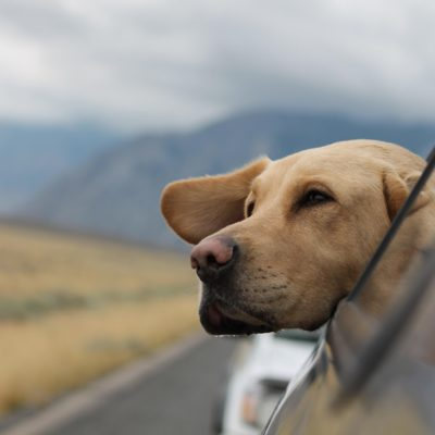How to Travel With the Dog and Kids Like a Pro
