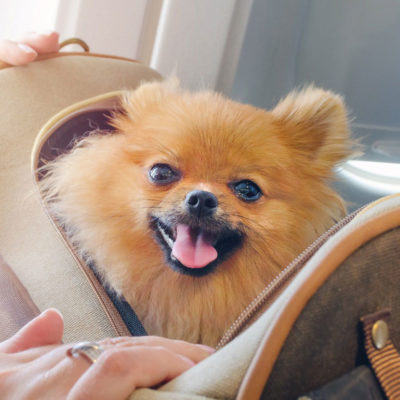 Crucial Things To Consider When Travelling With Your Pooch In Tow