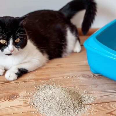 How to Prevent Cat Litter Box Issues and Problems