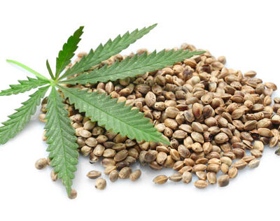 What you need to know about Marijuana Seeds