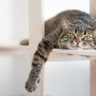 Top tips for keeping your indoor cat happy
