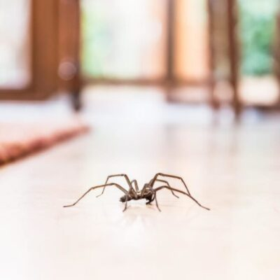 3 Tips For Preventing Household Pests While You're Away