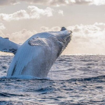 Whale Watching Tours Perth