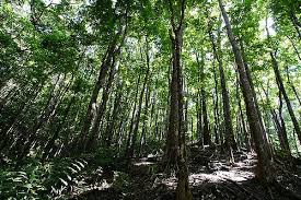 How You Can Help Reforestation Charities?