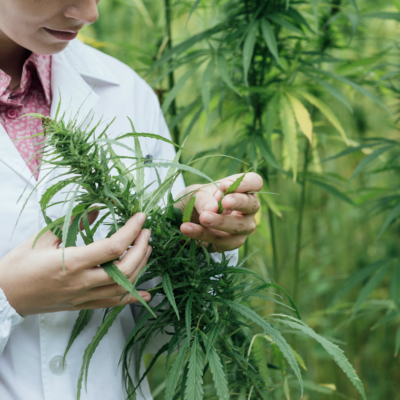 Fintech Innovations In The Cannabis Industry: 5 Important Developments