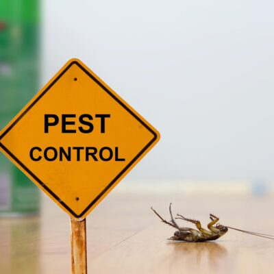Pest control for your Massachusetts home: Things to know
