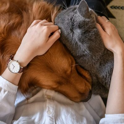How Therapy Animals Can Improve Your Mental Health