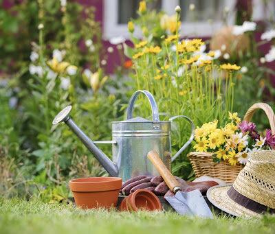 5 Gardening Tips For Beginners