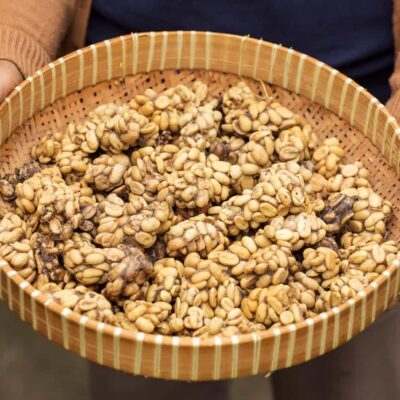 What Is Kopi Luwak and Why Is It All the Rage?