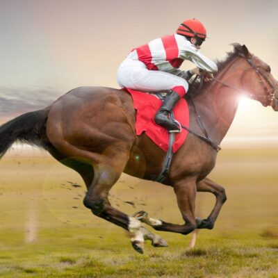 4 Of The Fastest Horse Breeds In The World