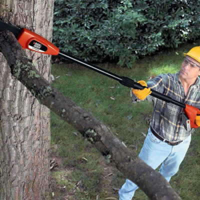 Why Are Arborists Important for Your Home?